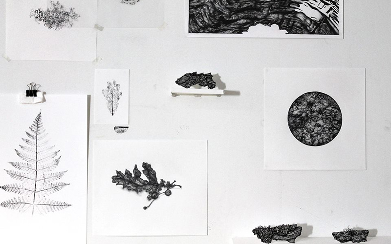 black and white photo of a wall with several drawings and prints of natural objects such as leaves and bark on light background paper