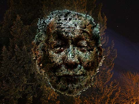 Jamie Gledhill - Image of a human face against a backdrop of and made up of trees at night