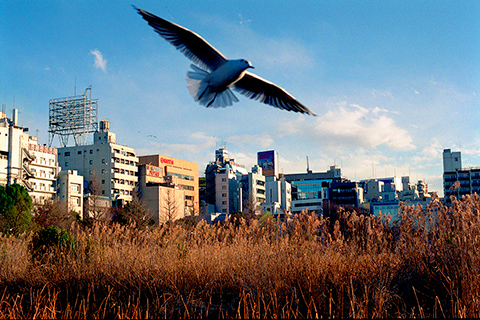 Untitled - Photograph of a cityscape looking up from a tall grassy field with blue sky and a bird swooping into the foreground