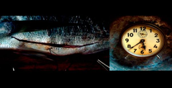 Dali's Cut - Close up photograph of a rusty clock on the right and the side of a fish on the left
