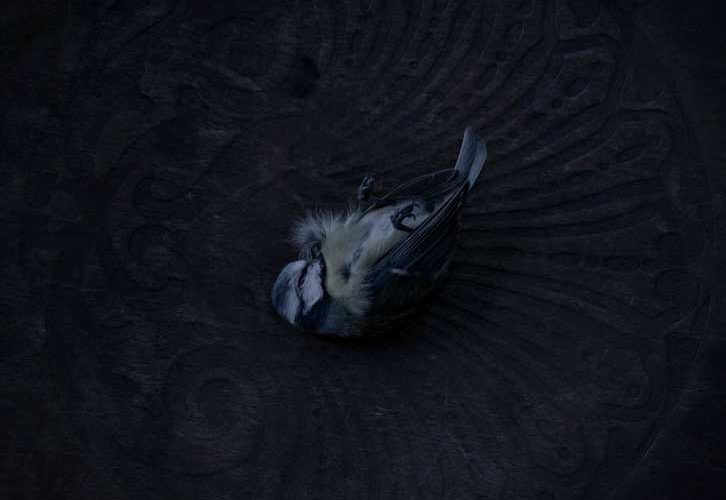 Dead blue tit image by BA Photography student Jo Lauren