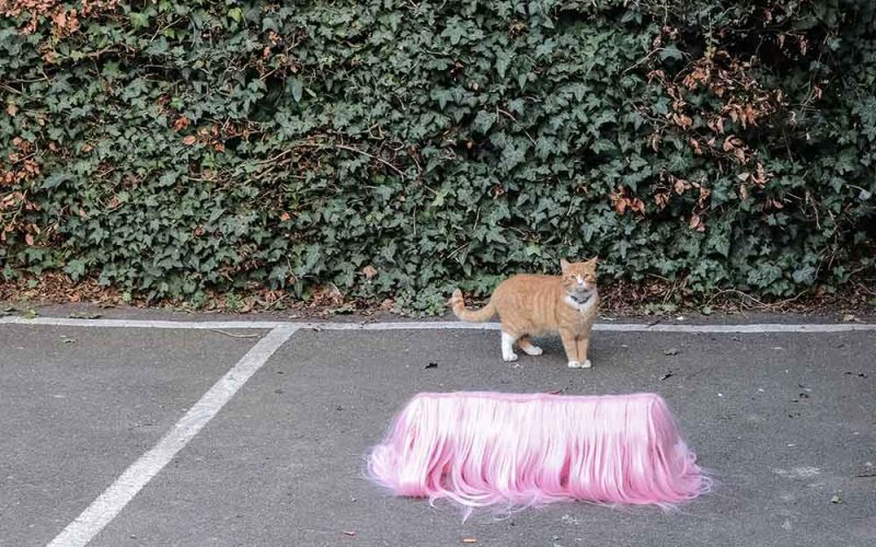 Cat standing by pink furry object, art work by BA Fine Art student Rosie Green at Norwich University of the Arts