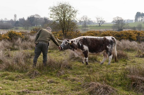 Benjamin Leech - Photograph by Ben Leach of BA Photography, Norwich University of the Arts of a man feeding a cow