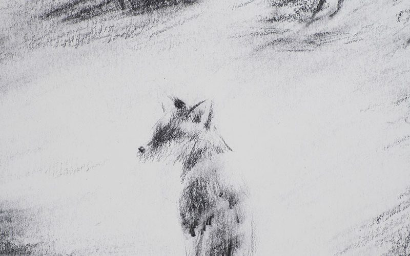 BA Illustration work showing a fox illustrated in the Norwich University of the Arts Degree Show