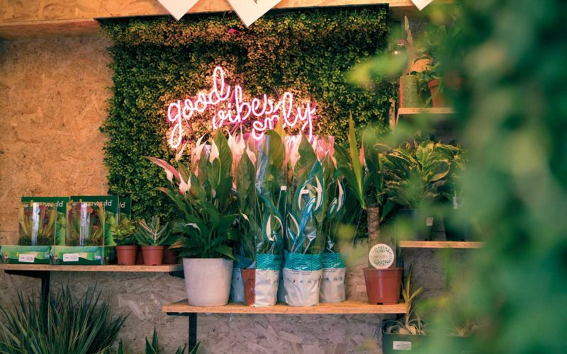 Plants sat on a shelf in Norwich plant shop, Botanical in front of a neon sign saying 'good vibes only' and surrounded by other plants